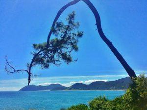 Mar y árbol.1