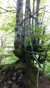 arboles-un-tronco